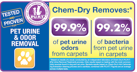 Our Pet Urine and Odor Removal Treatment removes 99.9% of pet odors and 99.2% of bacteria